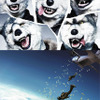 『X-ミッション』のイメージソングを手がける「MAN WITH A MISSION」(C)2015WARNER BROS.ENTERTAINMENT INC.